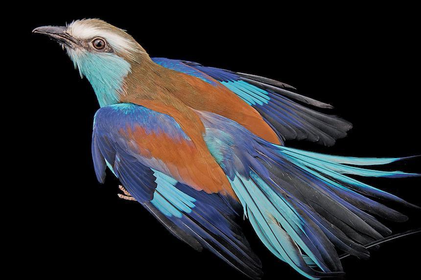 Animales en extinción - Ave colorida