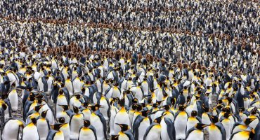 Pingüinos, paisajes y leyes absurdas: las fotos que tienes que ver el fin de semana