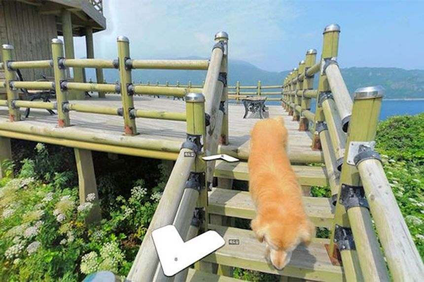Mapa virtual - Perrito jugando