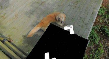 ¡Conozcan al perrito que apareció en toda una ruta de un mapa virtual!