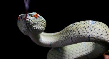 ¡Ni Wonder Woman!: esta señora saca de su casa a una serpiente