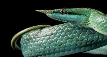 Algunos retratos de animales que podrían desaparecer del mundo