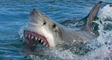 Estos hombres se encuentran cara a cara con un tiburón blanco