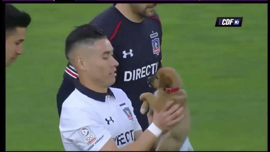 Aww: Colo-Colo sale a la cancha con perros que buscan ser adoptados