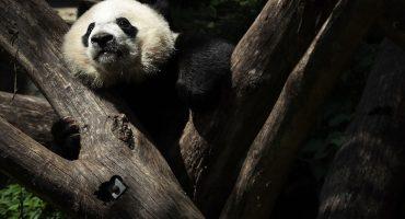 China construyó una planta de energía solar... ¡con forma de panda!