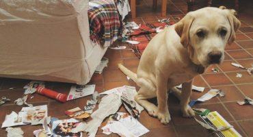 15 perritos que cometieron fechorías y están muy arrepentidos