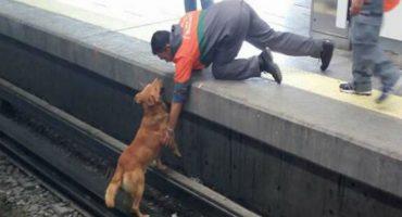 La nota sad del día: perrito muere electrocutado en vías del metro
