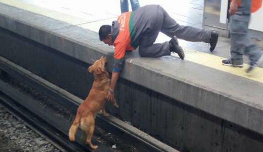 Perrito muere electrocutado en vías del metro