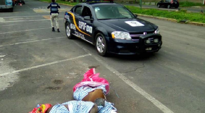 Perros hallados muertos en Coyoacán, posiblemente torturados