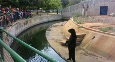 Policía venezolana investiga robo de animales de un zoológico... para ser comidos