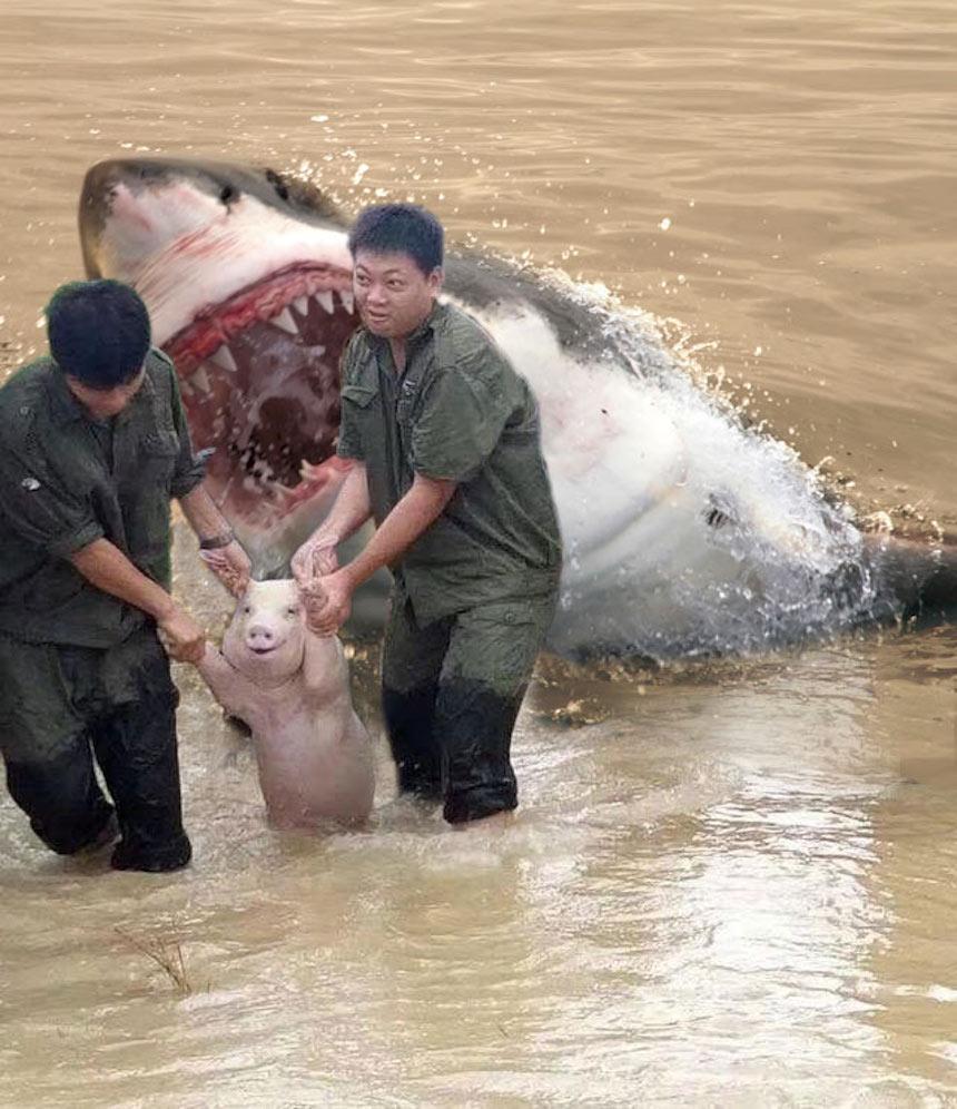 Cerdo de Photoshop - Tiburón
