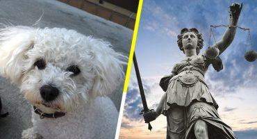 ¡Justicia!: un perrito decide quién es su dueño en una corte