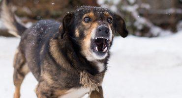 ¡¿Cómo, los perros no pueden oler el miedo?!
