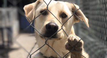 ¿Por qué adoptar un perro te puede cambiar la vida?