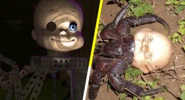 Este cangrejo muestra que el horror en Toy Story es totalmente real