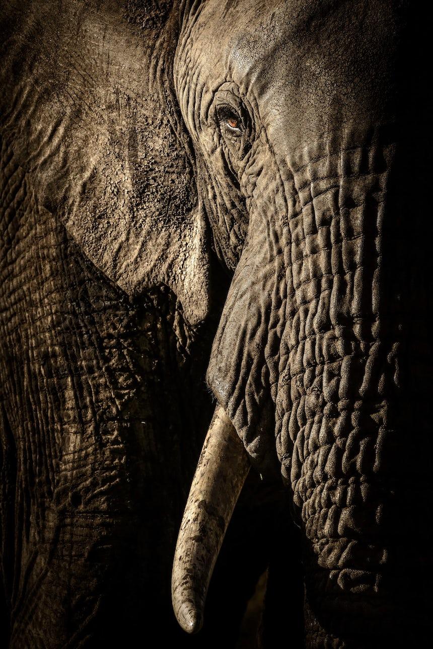 Wildlife Photographer of the Year 2017 - Elefante