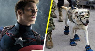 El Capitán America admira el valor de nuestra heroína Frida