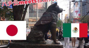 Japón <3 México: El día que a Hachiko le pusieron chaleco de Marina en honor a Frida