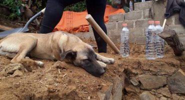Conoce a Jacinto, el perro que espera a su dueño sobre los escombros
