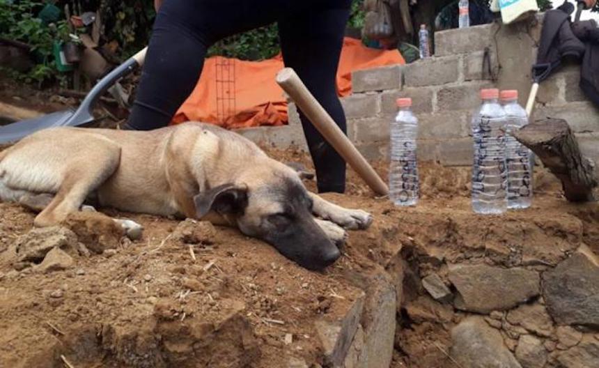 El perro Jacinto espera a su dueño después del sismo