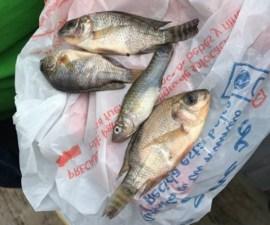 Extraña lluvia de peces en Tamaulipas