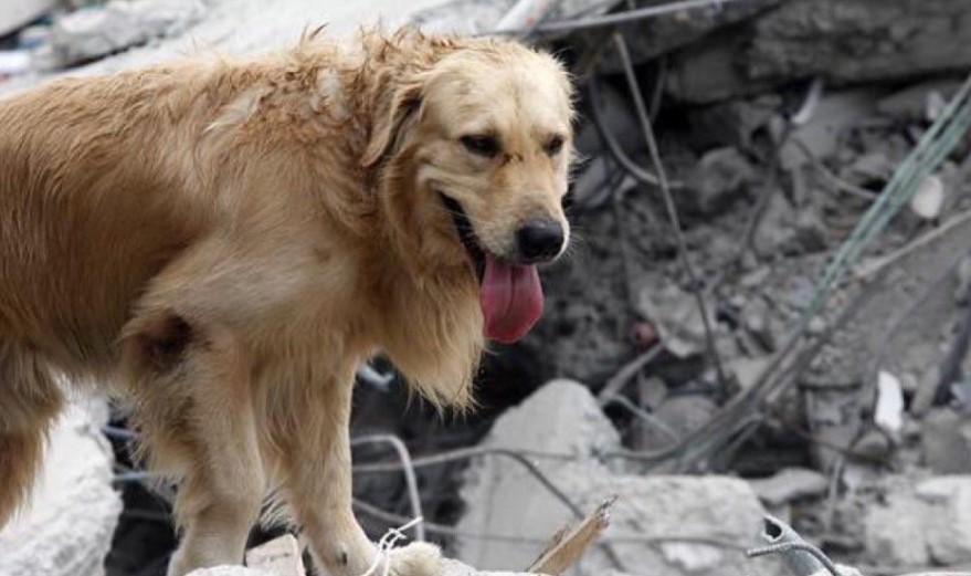 Mascota rescatada durante sismo