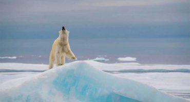 ¿Puedes encontrar al oso polar escondido en esta foto?