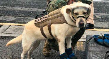 Frida, la perrita que se convirtió en símbolo de esperanza ante el sismo