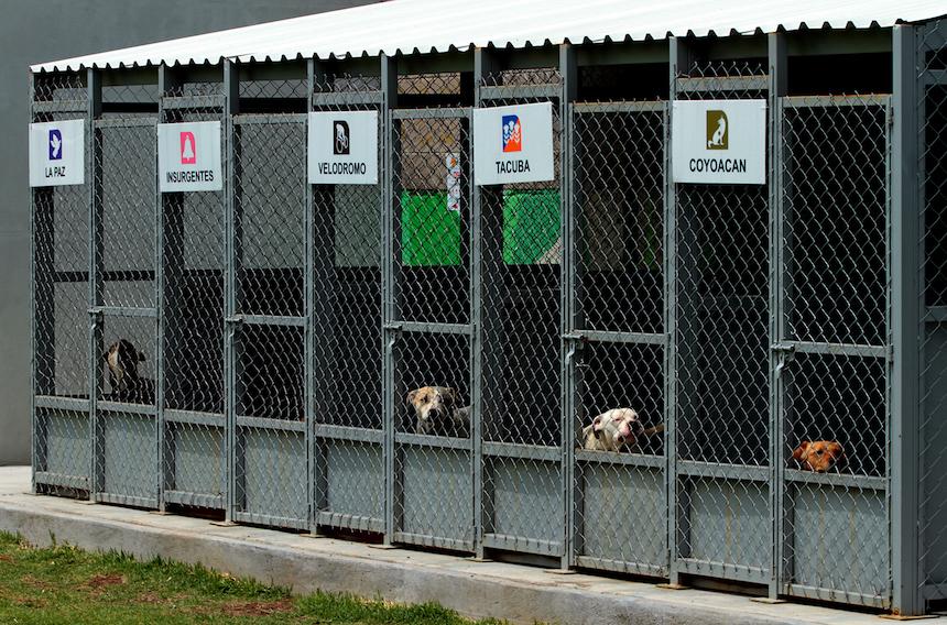 Perritos abandonados en el Metro