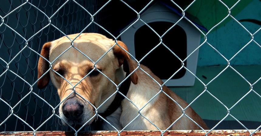 Crecen casos de perritos abandonados en el Metro