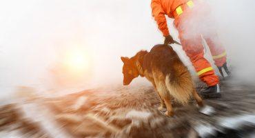 ¿Qué es lo que los perros rescatistas olfatean en los escombros?