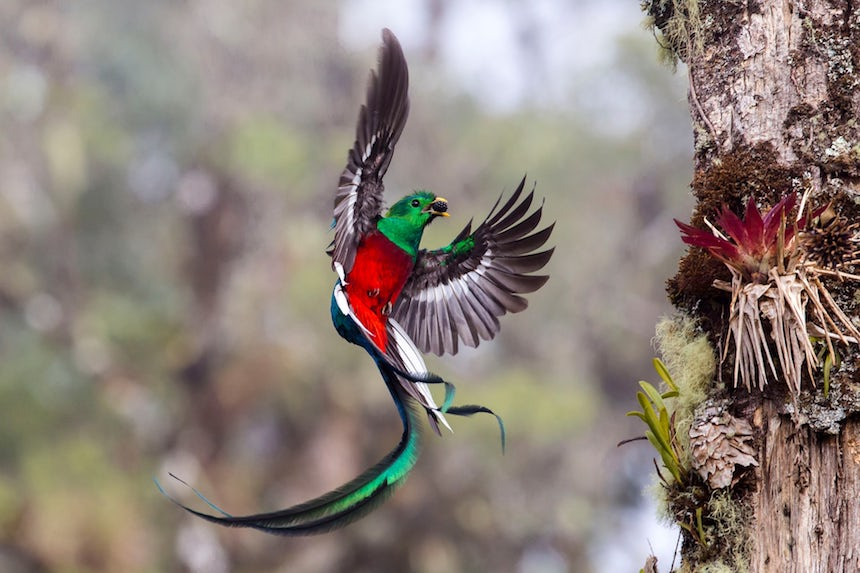 Wildlife Photographer of the Year 2017 - Quetzal