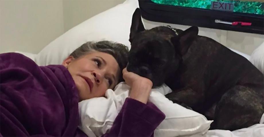 Mira cómo el perrito de Carrie Fisher ve a su ama en el tráiler de The Last Jedi 💔
