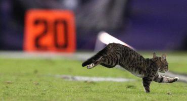 El gato invasor del TNF ya tiene hogar.