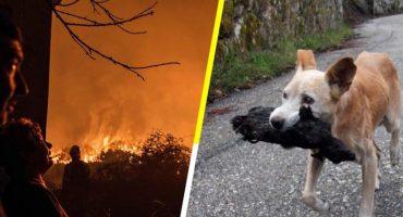 ¿La imagen más triste del año?  Una perrita rescata a su cría calcinada tras los incendios Galicia