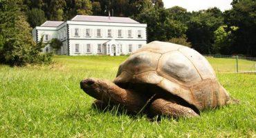 Love Wins! 🐢  La tortuga más vieja del mundo tiene 186 años y es gay