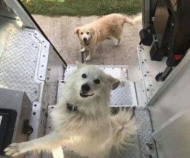 Empleados de UPS y perritos - Portada
