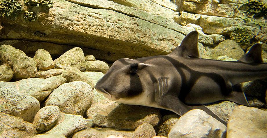 Esta señora rompió el internet al lanzar a un tiburón de una alberca