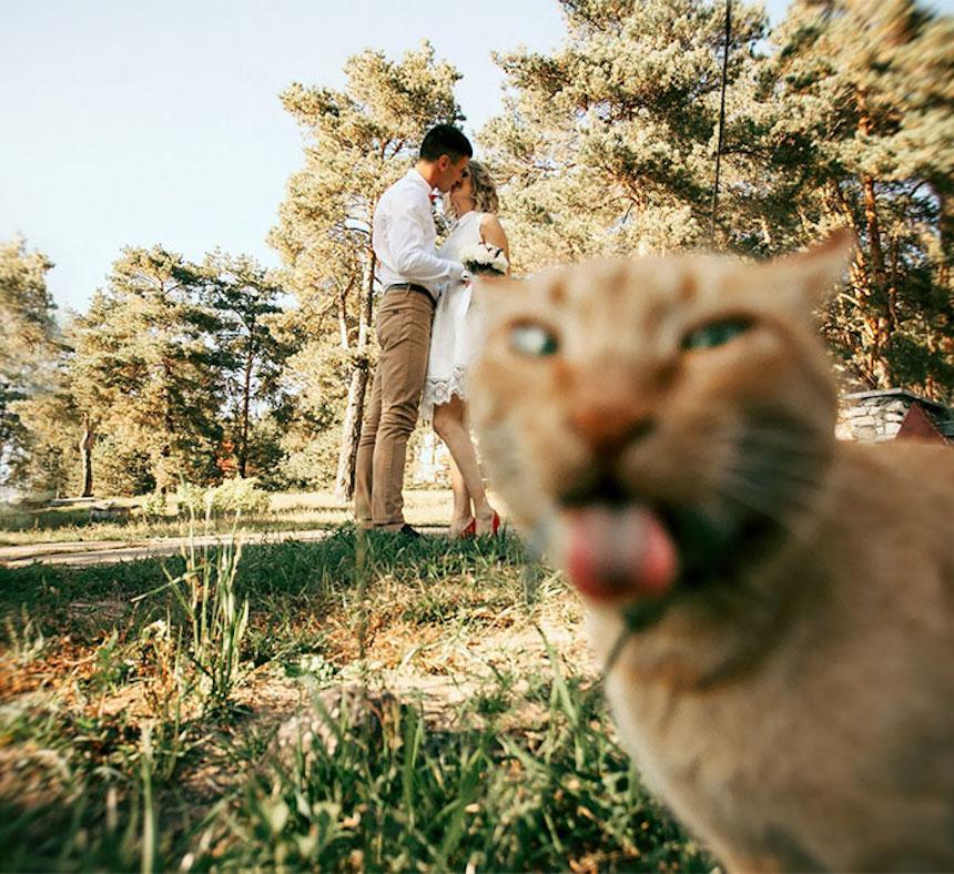 Photobombs de bodas - Gato asqueado