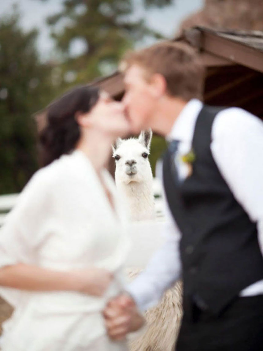 Photobombs de bodas - Llama