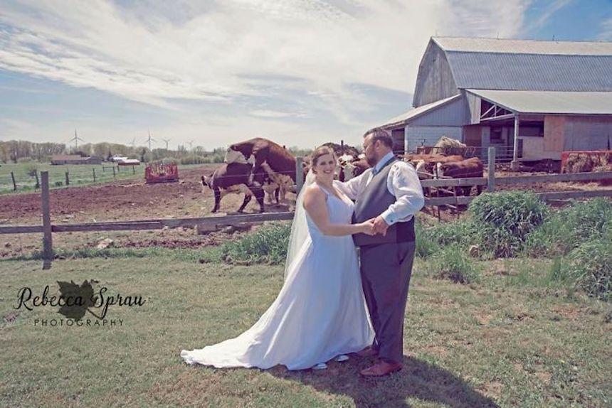 Photobombs de bodas - Vaquitas cariñosas