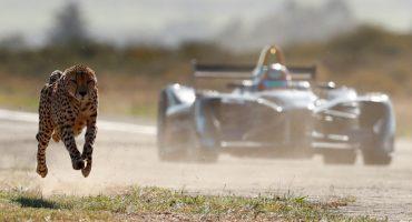 Quién ganará ¿Un guepardo o un Fórmula E?