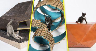 Arquitectos construyen 12 refugios para ayudar a gatitos sin hogar