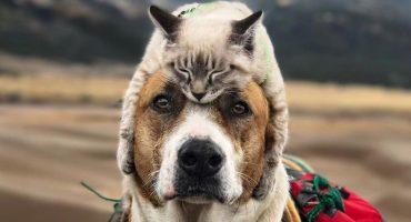 Un gato y un perro son la pareja perfecta para viajar y sí, nos encantan