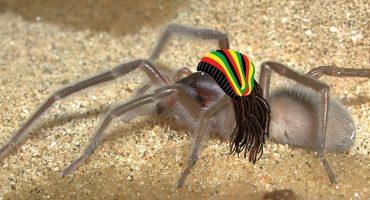 No Spider No Cry! Bob Marley es el nombre de esta nueva especie de araña