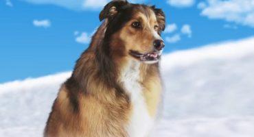 Existe una película de un perro que planea una boda y sí, ¡hay tráiler!