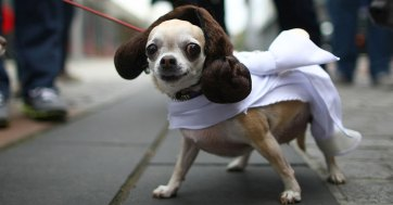 cachorro-star-wars11