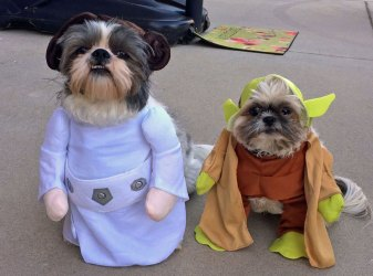 cachorro-star-wars12