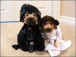 cachorro-star-wars13