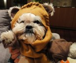 cachorro-star-wars14